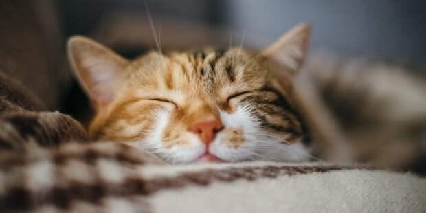 10 научно обоснованных причин завести дома котика