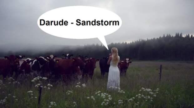 Как правильно подзывать шведских коров.