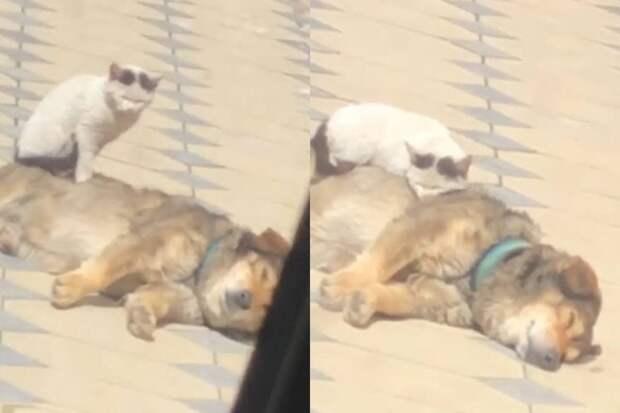 «Примостился»: кот нашел теплое место для отдыха насобаке иумилил Сеть