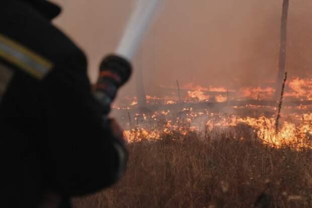 Больше 200 гектаров леса загорелось в Воронежской области