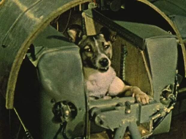В чем значение полета? «Спутник-2», день в истории, космос, собака Лайка