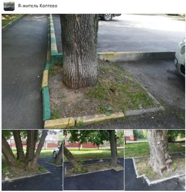 Приствольное пространство деревьев на Большой Академической соответствует норме