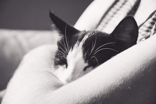 Спасение замерзающего котенка в Ижевске, вакцина от коронавируса и новые Барби с кожными болезнями: что произошло минувшей ночью