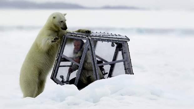 Во время съемки этого видео мужчина больше всего боялся, что стены его прозрачного убежища треснут на морозе Гордон Бьюкенен, белый медведь, видео, медведица, медведь, норвегия
