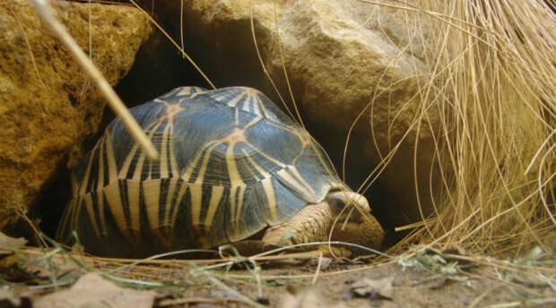 7 животных, которые ставят даже современную науку в тупик. Они живут сотни лет, а не должны