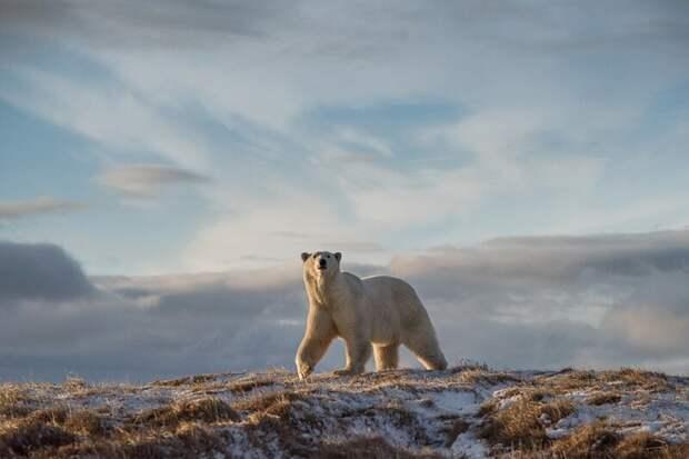 Главный победитель конкурса «Дикая Природа России 2018» и победитель в категории «Млекопитающие» national geographic, в мире, животные, красота, природа, россия, фото