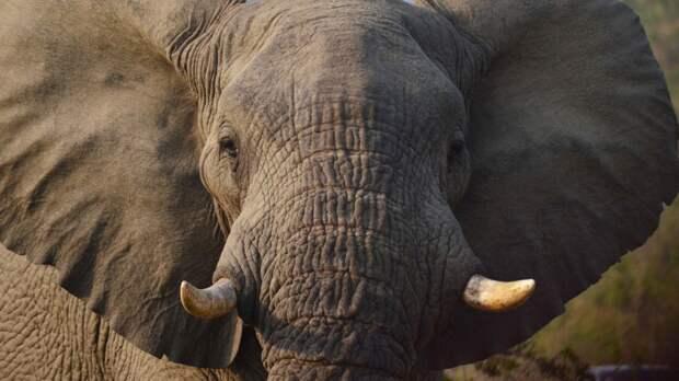 Подравшихся в казанском цирке слоних перевезли в крымский парк «Тайган»