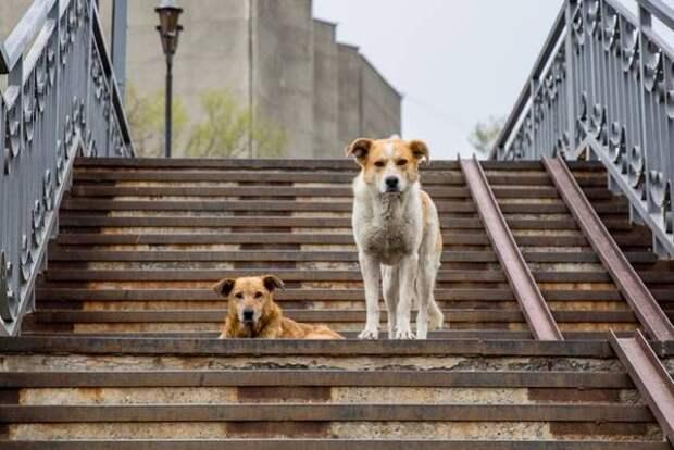 Более тысячи бездомных собак стерилизуют в Краснодаре до конца года