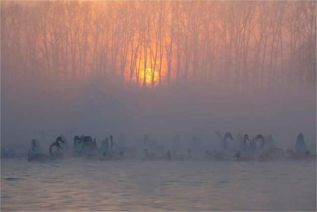 Лебеди в зимней алтайской ночи