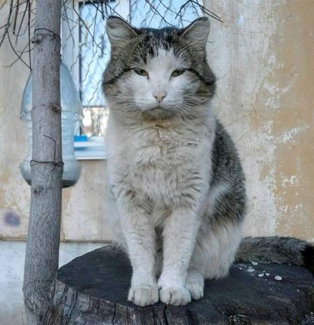 Жил кот у нас во дворе на спиленном дереве...