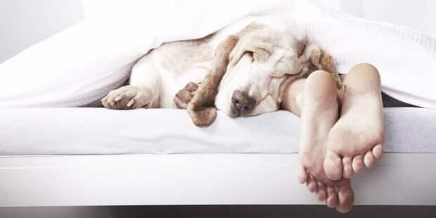 Женщины лучше высыпаются, когда спят с собаками, а не мужьями! Вот почему