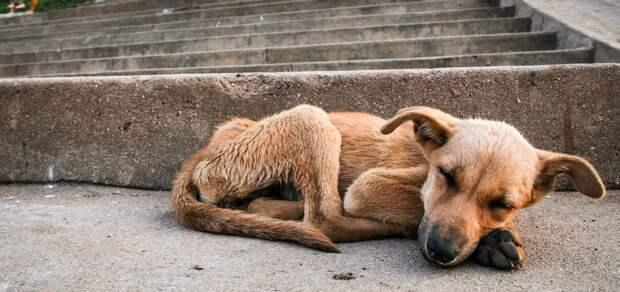 За выброшенное животное в Италии дают 10000 евро штрафа или 12 месяцев тюрьмы