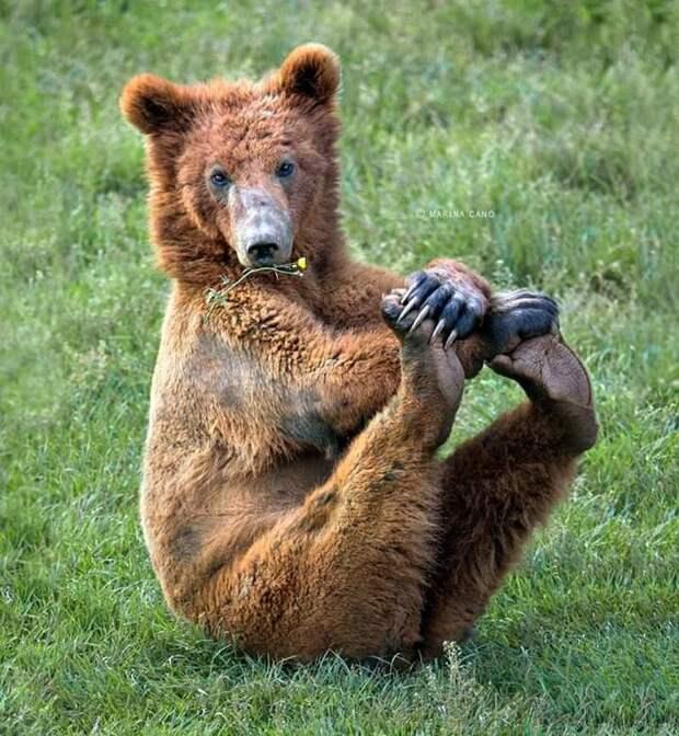 Замечательные, веселые и позитивные фотографии про животных