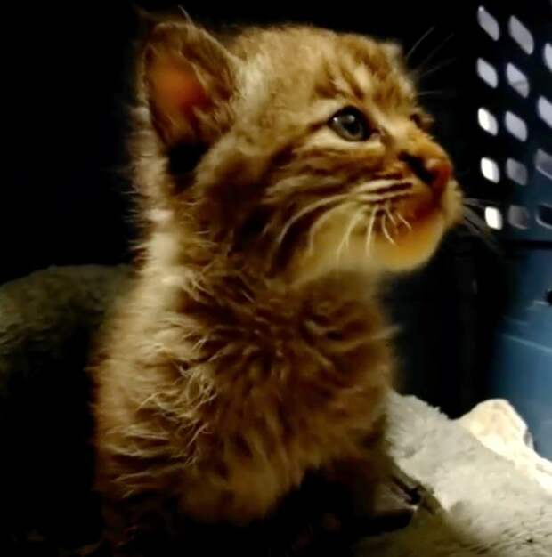 «Никакой это не котёнок!» Мужчина спас малыша из-под машины, а его чуть не отругали…