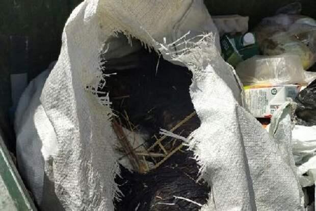 В мусорный бак на Киквидзе выкинули живую собаку в мешке