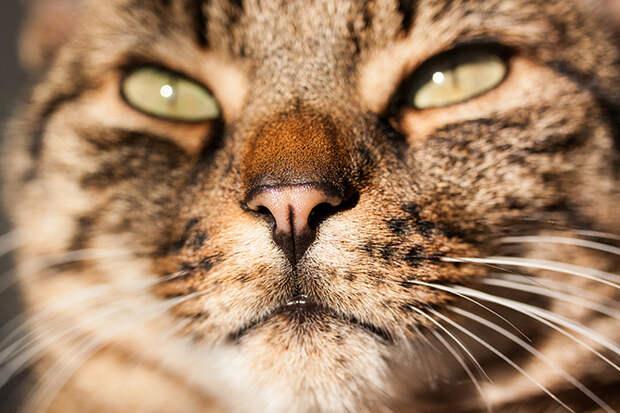 Любопытные факты об усатых любимцах