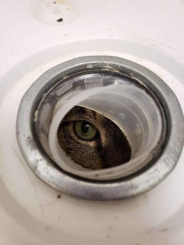 кошка наблюдает за кем-то