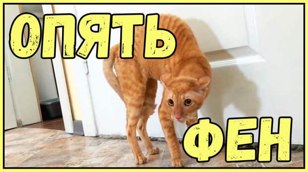 Подборка видео с котами ( опять фен )