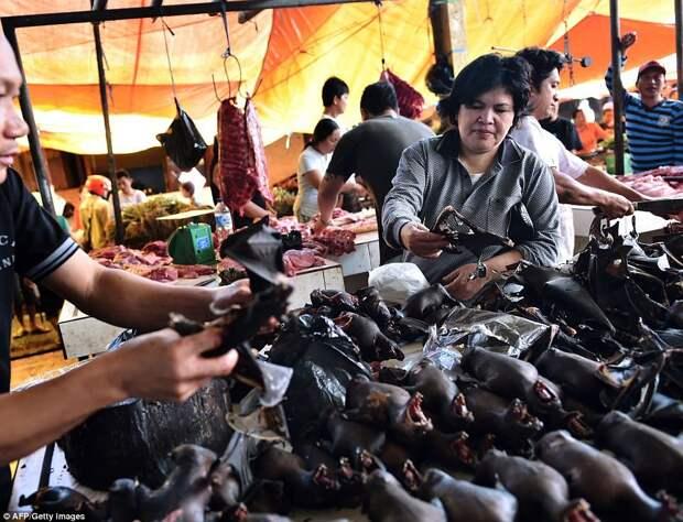 Фатальный деликатес: китайцы снова начали есть летучих мышей