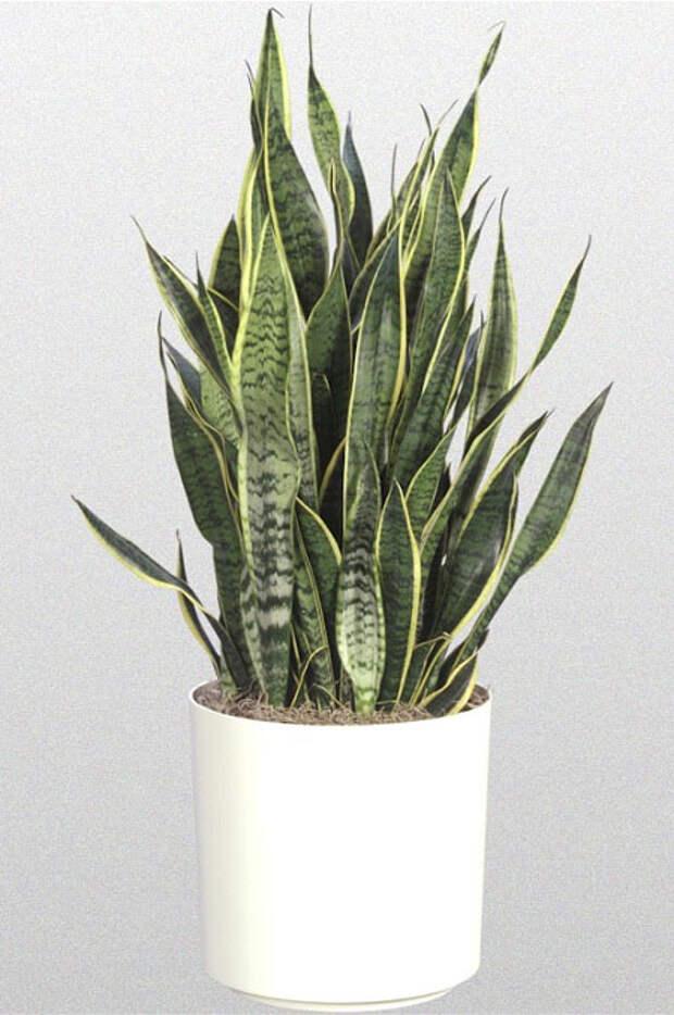 Самые полезные комнатные растения