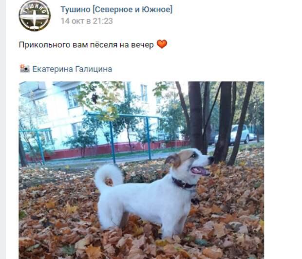 Фото дня: благородный пес встречает осень в Тушине