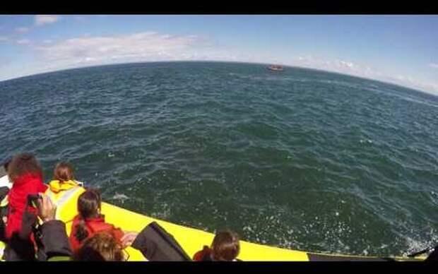 Как гигантский кит чуть не проглотил лодку с людьми: уникальное видео