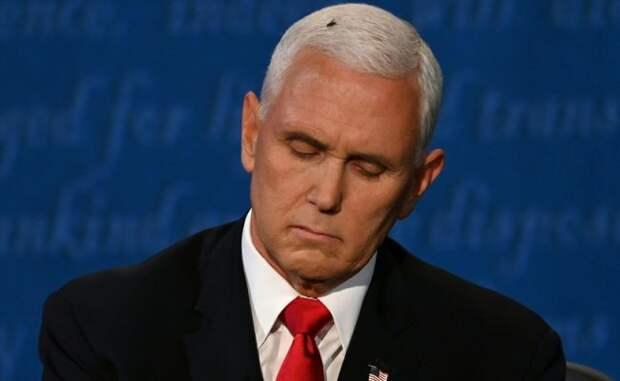 Героем дебатов кандидатов ввице-президенты США стала муха