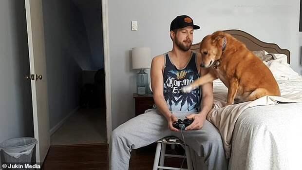 Пока люди играют в видеоигры, рядом отчаянно скучают их собаки
