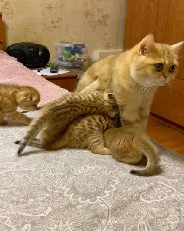 Материнское счастье в картинках