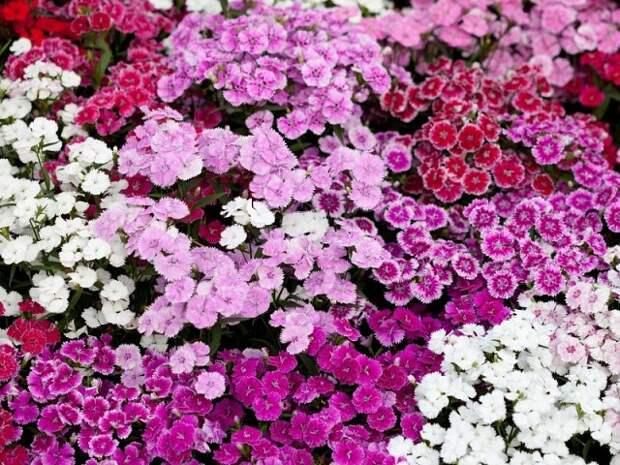 Ростостимулирующий раствор для растений