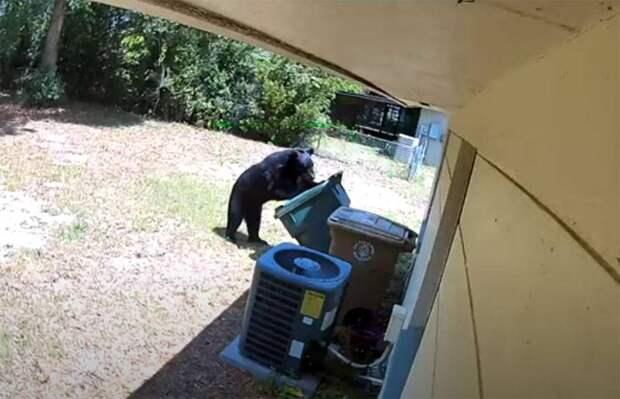 Медведи на улицах: природа ликует во время пандемии