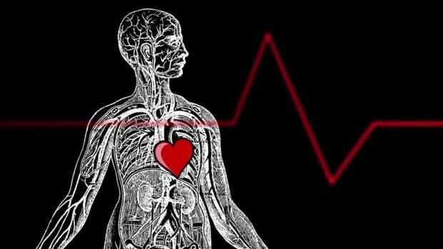 Как бьется сердце?