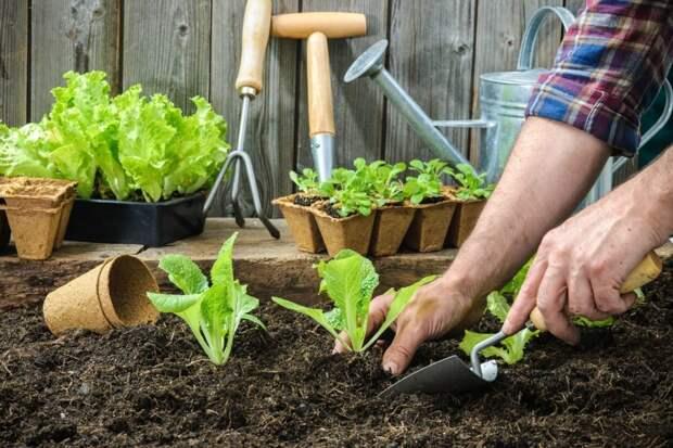 Дачникам не запретят выращивать овощи и фрукты