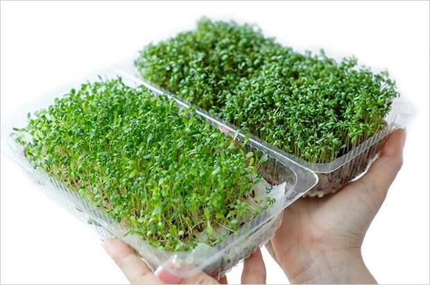Суперфуд на окошке. Почему весной особенно полезно выращивать микрозелень