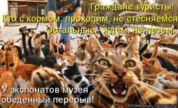 Коллекция самых свежих и лучших котоматриц