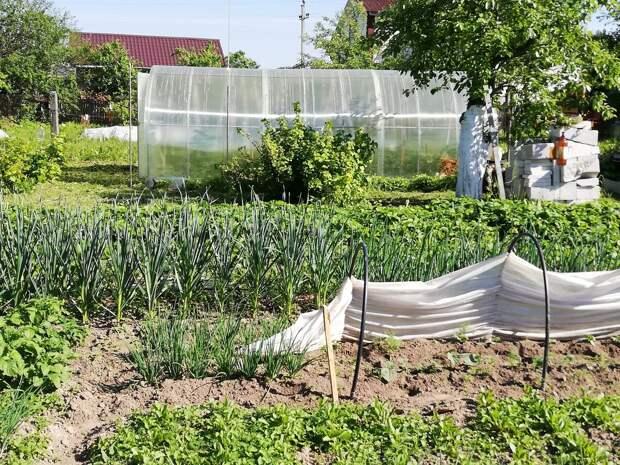 Огурцы на шпалере: теперь выращивать огурцы будем только так