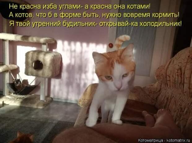 Лучшая котоматрица за неделю (32 фото)