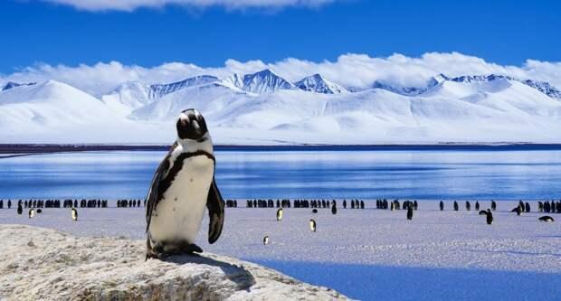В библиотеке имени А.С.Грина расскажут об Антарктиде/pixabay.com