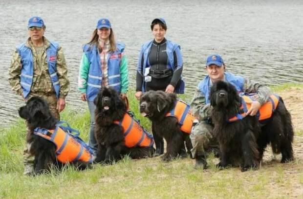 Тренировки собак -водолазовпо спасению людей проходят на ПСС «Строгино»