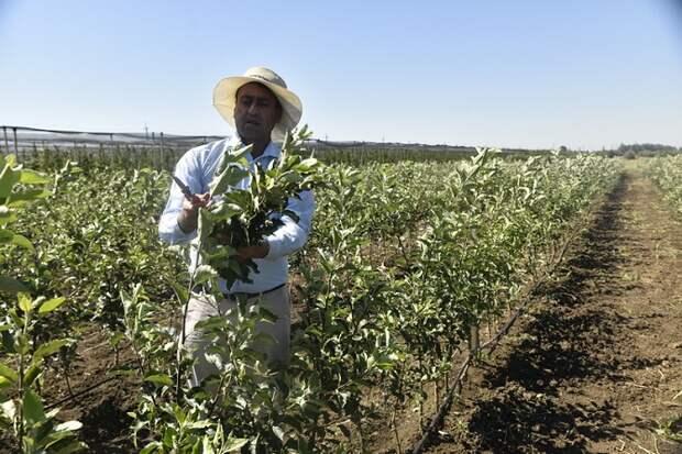 На Кубани заложат 1750 гектаров садов