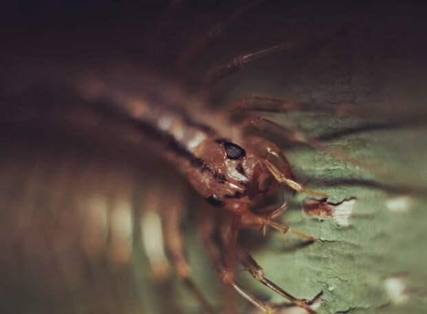 Фасеточные глаза вы наверняка видели у мухи. Они состоят из множества отдельных единиц – омматидий, объединяющихся в общую систему зрения.