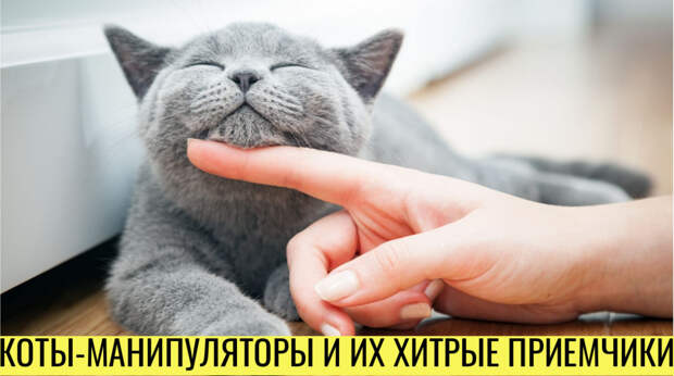 Шерстяные манипуляторы: как коты управляют своими хозяевами