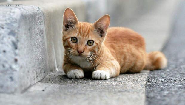 В жару ветеринар посоветовал хозяевам постричь собак и меньше трогать котов
