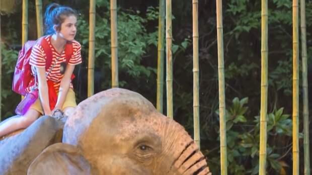 Видео: 8 случаев спасения людей животными