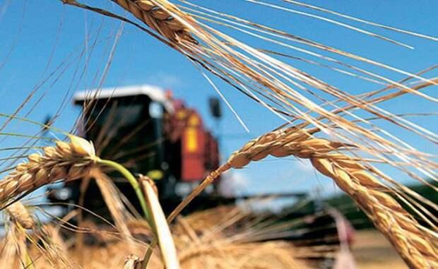 Экспорт зерна помогает России сокращать нефтяную зависимость