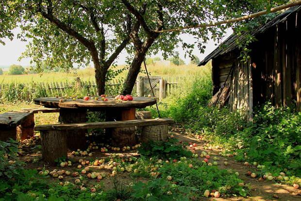 Старый яблоневый сад