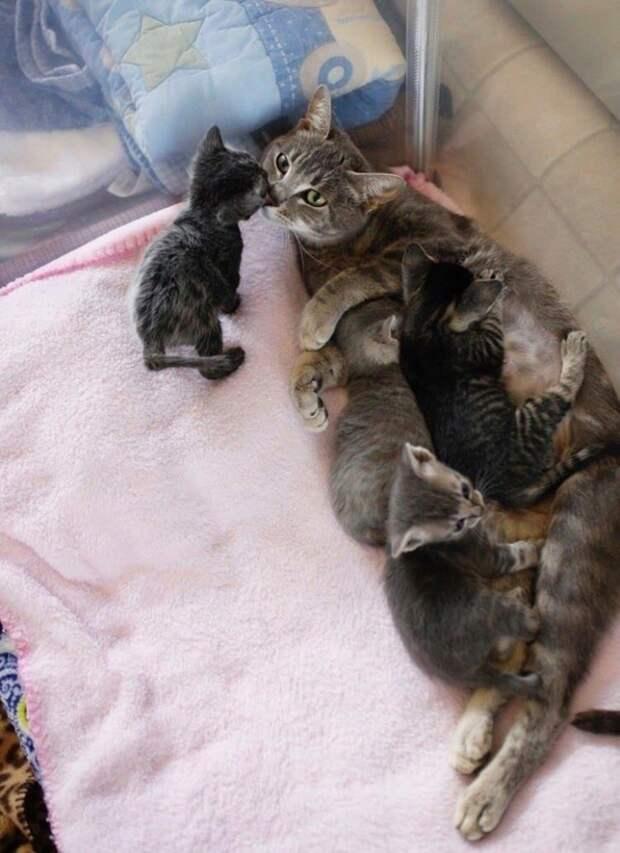 Спасение раненой и парализованной беременной кошки