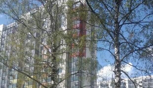 На Долгопрудной произвели санитарную обрезку деревьев