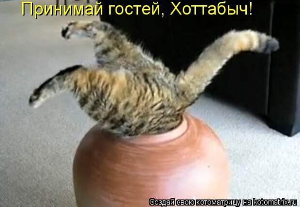 Котоматрица: Принимай гостей, Хоттабыч!