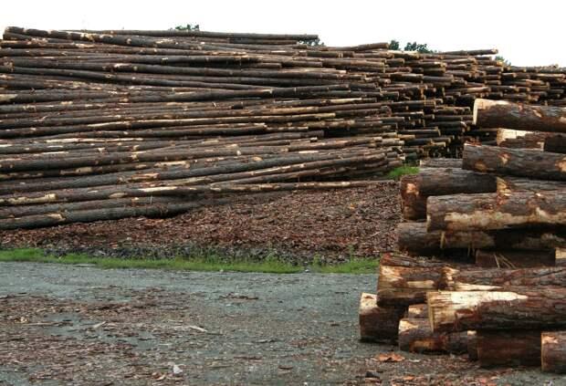 В Завьяловском районе Удмуртии неизвестные вырубили почти 160 кубометров леса